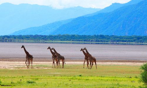 Lake Manyara National Park (Tanzania)