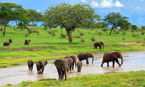 Tarangire National Park (Tanzania)